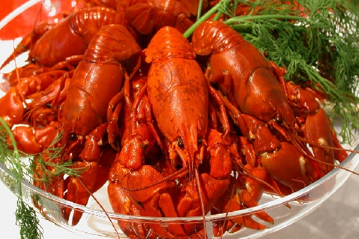 Crayfish are boiled in brine with dill for about 10 minutes.