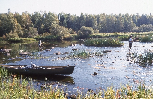 By canoe you can also reach remote places of River Kiiminkijoki where there are only few other anglers.