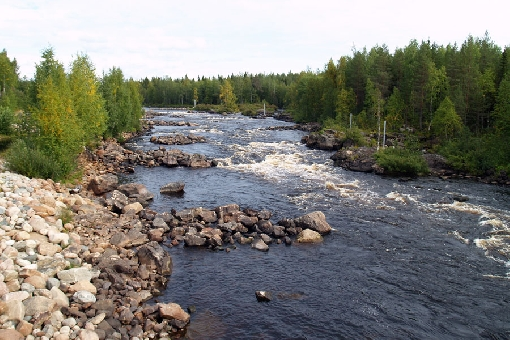 Part of River Raudanjoki, the Vikaköngäs Rapids is a popular 'plant and fish' site to the north of Rovaniemi.