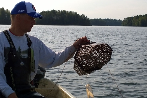 Lake Mallasvesi is among the best crayfishing lakes in the Tampere Region.