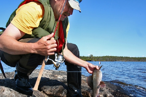 Grayling can be caught with spinners from the shores of mid-lake islands and shoals.