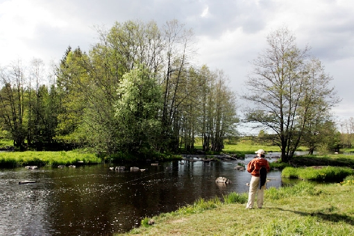 The Lankoski Rapids is one of the most well-known fishing grounds in River Merikarvianjoki.