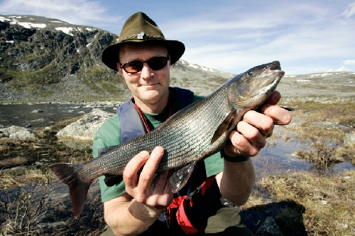 In Mountain Lapland, good grayling spots are often located around the tree line.
