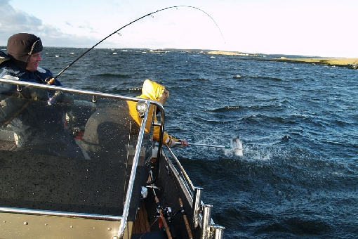 Virolahti in the Eastern Gulf of Finland is one of the best areas for sea trout.