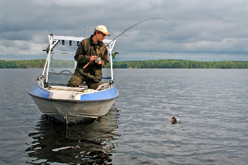 Perch for Fishing in finland