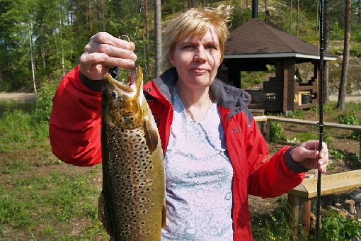 Brown trout exist in many 'plant and fish' lakes.