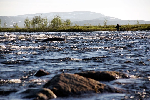 River Rommaeno rapids in the headwaters of River Tornionjoki are home to big grayling.