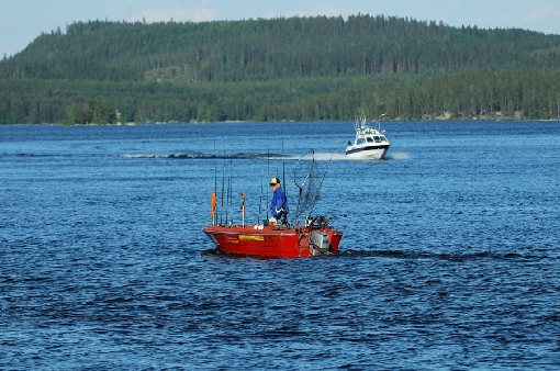 A trolling competition on Lake Upper Keitele in June. Kokkosalmi Sound is a great hot spot.