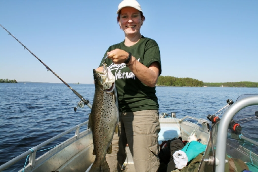 This fat trout struck a spoon in the Koljonselkä mid-lake area on top of deep water at 5 metres in early summer.
