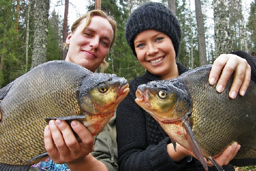Bream (Abramis brama).